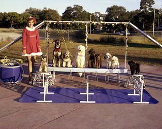 Barbara Lee dog act at the Sarasota High School Sailor Circus