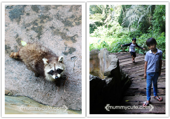 8286642310 1798e463fa z Bercuti di lost world of tambun 2 | Rainforest Trail