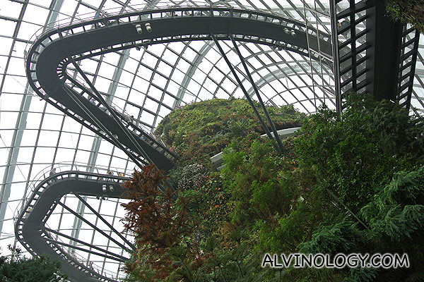 Revisiting Cloud Forest