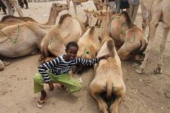 Camel Market (53)