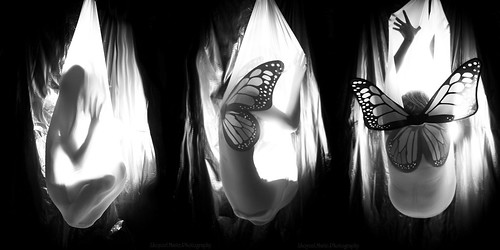 life light white black marie project butterfly bug dark photography death wings vessel stages fabric cycle metamorphosis cocoon lightroom lhoycelmariephotography lhoycel