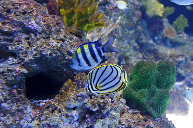 RWS S.E.A Aquarium 440