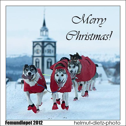 Sleddog Photography Merry Christmas Helmut Dietz Bielefeld Germany Femundløpet 2012 Røros Norway
