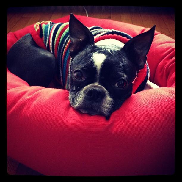 Stella Dog Bed Reviews