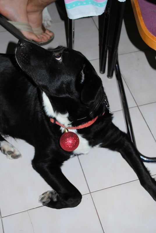 Daisy and her Christmas ball