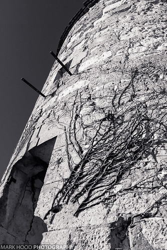 Ivy-coated tower