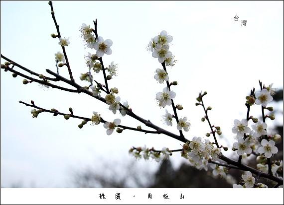 IMG_5900