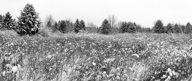 Walnut Woods Panorama 1