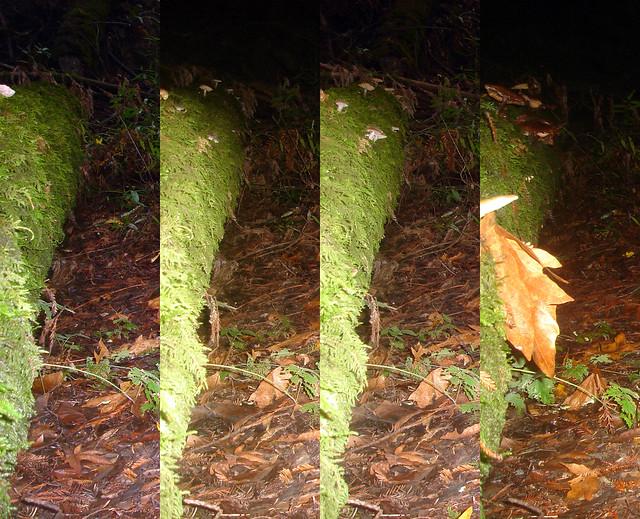 fungi.timelapse