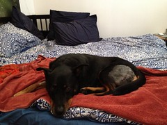 Kenobi resting
