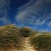Dune di sabbia Spiaggia di Rena Majore Santa Teresa di Gallura 2