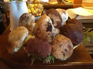 Funghi Porcini del Monte Amiata