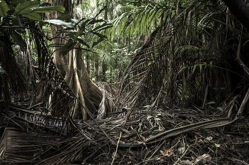 Chaos végétal, Guyane Française by Mickael Berteloot