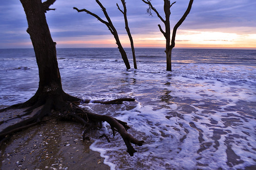 ocean trees sunset sea sky usa cloud sunlight tree nature water horizontal sunrise outdoors photography coast oak tide horizon southcarolina wave nopeople atlantic botanybay boneyard baretree scenics seafoam waterscape tranquilscene colorimage jekaworldphotography jeffrosephotography