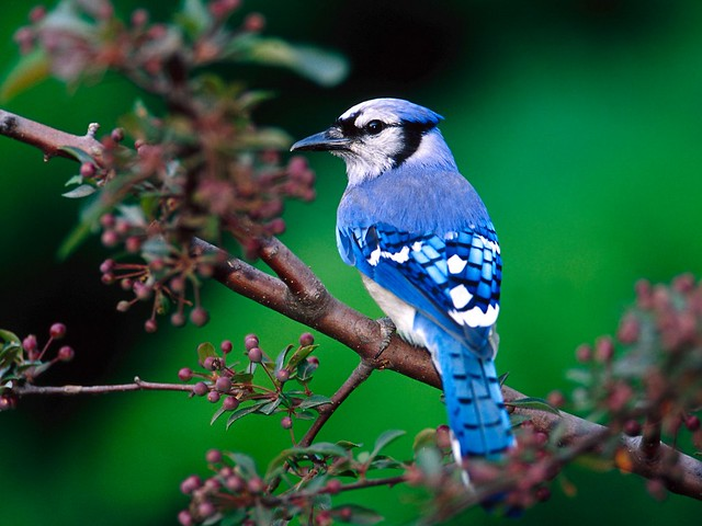 uccellini, casette per uccellini, bird house, birds pics