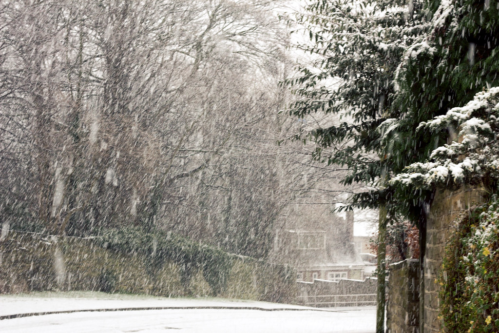 Snow 2013 I