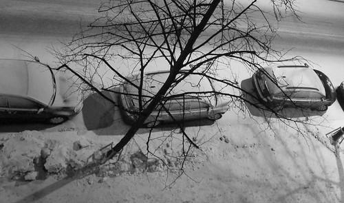 Puu kaupungissa by Anna Amnell
