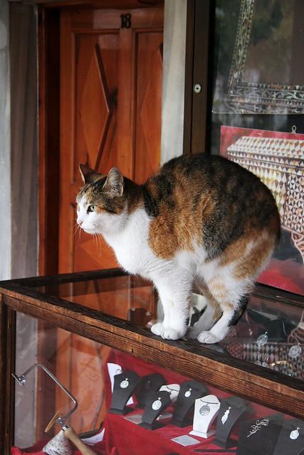 A cat stretching, Istanbul, Turkey イスタンブール、背伸びするネコ