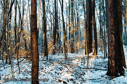 trees sun lake snow storm ice forest sunrise nc pond north greensboro carolina brandt rise