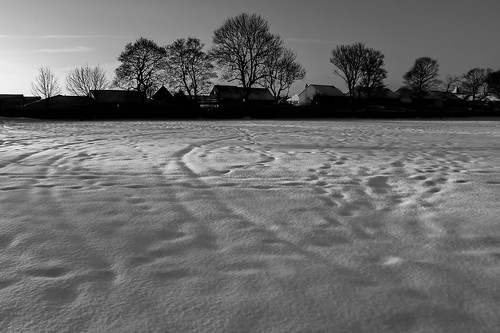 park trees bw white snow black monochrome leeds stanningley