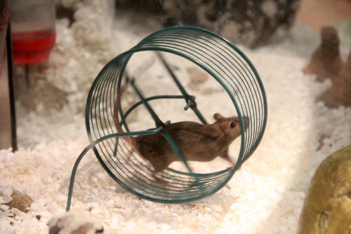 mouse_wheel