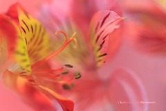 Sweet Dreams by Kay Kochenderfer Photography