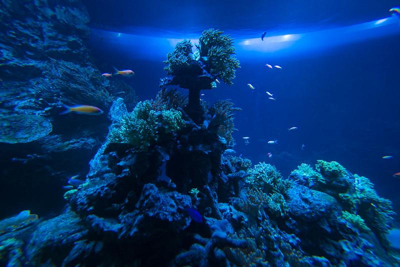 水族館撮影-3