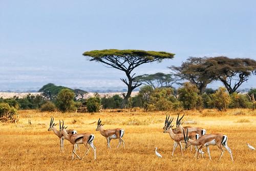 Kenya in Africa