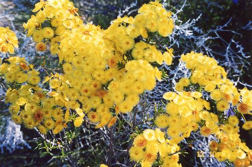 Field guide australian native plants join group