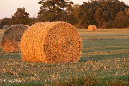 field grass texas farm hay np bale roundbale wallercounty mayerroad wyojones
