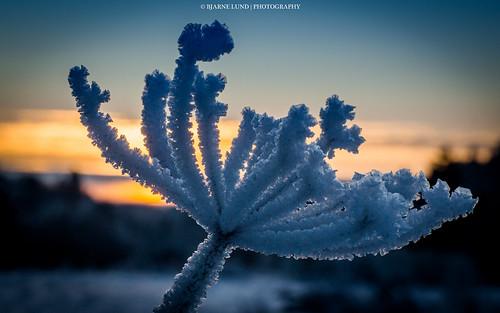 sunset snow macro norway sony sigma bergen hordaland 2012 a77 70mm