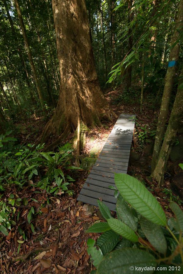 damai forest. malaysia
