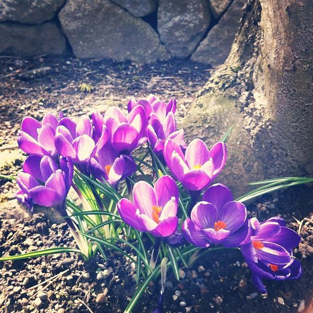 spring has sprung ~**