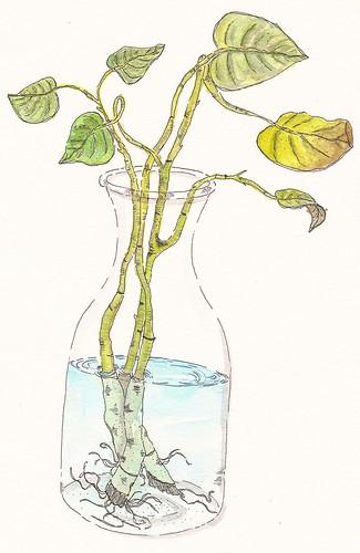 planta by AlanEduardo1