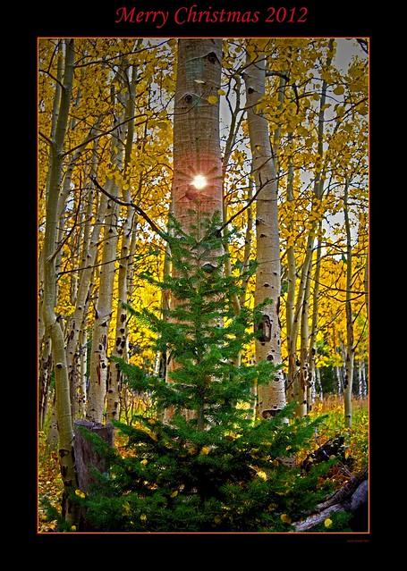 Aspen Christmas