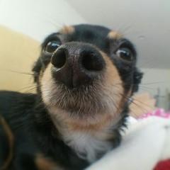 Coco close-up!