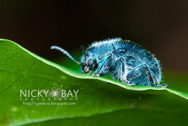 Blue Beetle - DSC_0914