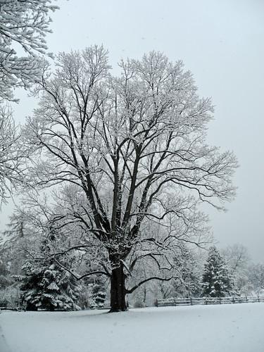 winter snow season landscape ngc pa npc winterscene woodmont gladwyne flickrchallengegroup flickrchallengewinner sunrays5 palacemission