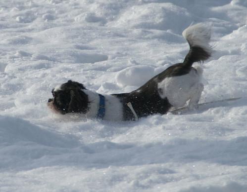 ABA-Snow-7