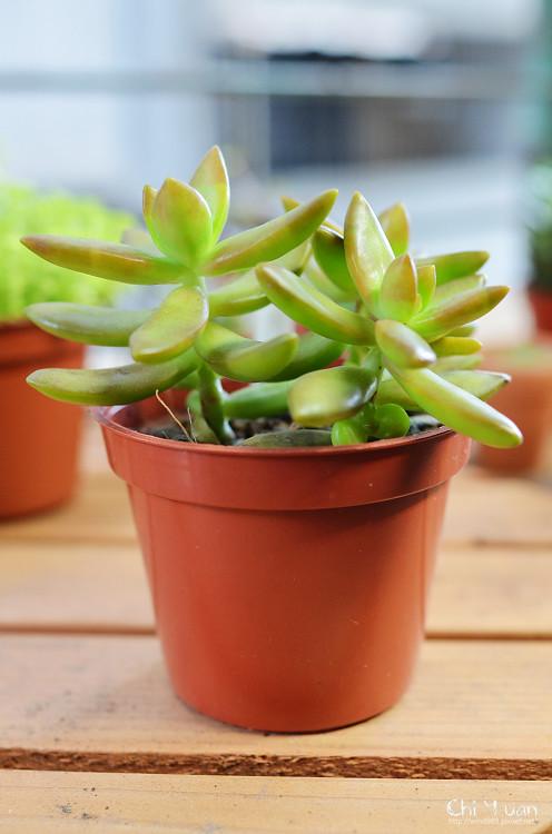 2012多肉植物14.jpg