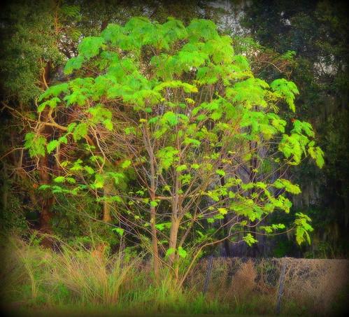 sunlight nature nikon vignette floridatree yabbadabbadoo manfrottotripod beautifulamerica awesomegreen tamronaf7030mmf456dildtelephotomacrolens nikond7000 vincefl colorsandcolorful
