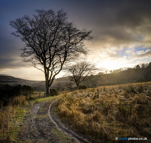 Knockhill Trees [Merge2]