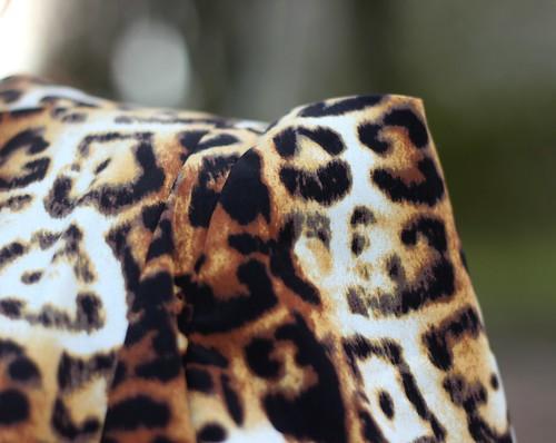 léopard8