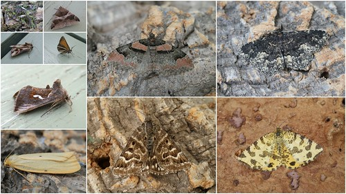 2012 macro moth highlights