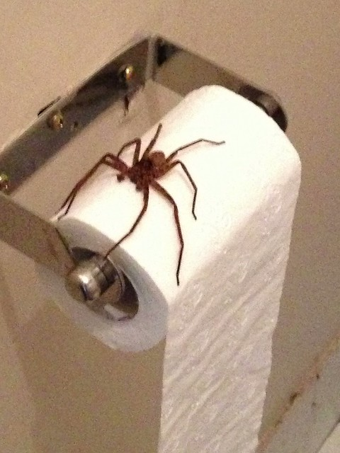 This Is An Australian Toilet Roll Holder Funny