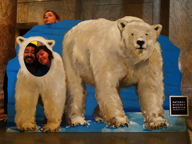 Los Angeles Museum Of Natural History Record Bear