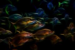 [フリー画像素材] グラフィック, フォトレタッチ, 魚類 ID:201301080600