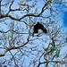 Flying Crow by KaTeB Fara7