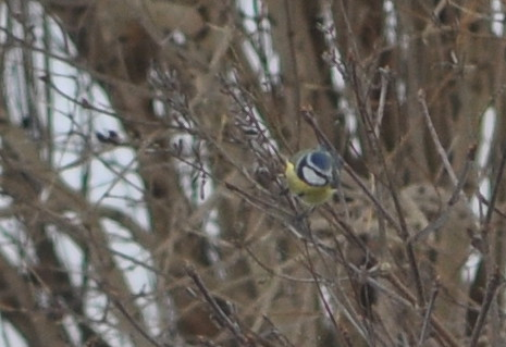 bird2b