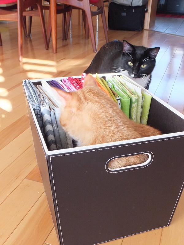 Felix and Tiberius helping organize fabric